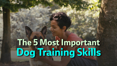 The 5 Most Important Dog Training Skills
