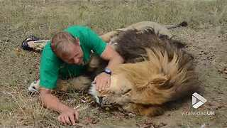 Fearless Fellow Cuddles and Kisses With Lion Like Old Lovers Do - Video