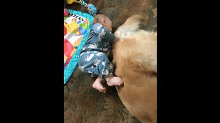 Baby plays peek-a-boo with doggy tail - Video