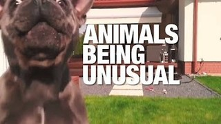 Animals Acting Strangely - Video