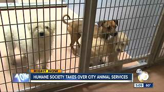 Humane society takes over city animal services