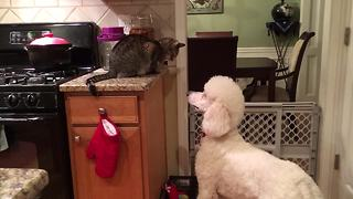 Dog and cat engage in hilariously epic stand-off - Video