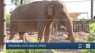 Phoenix Zoo welcomes back guests