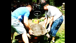 Latvian Strongmen Weigh Tortoises - Video