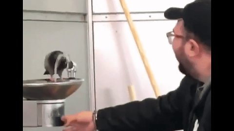 Man Helps Thirsty Pigeon Wet Its Beak at Water Fountain in New York