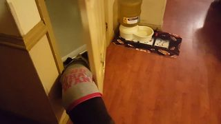 Pitbull Outsmarts Door To Get Treat - Video
