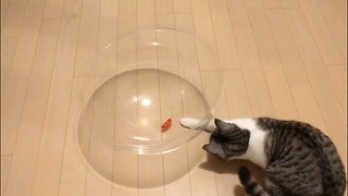 cat playing with Toy of a bug