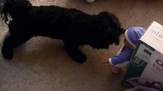 Dog versus a talking doll, watch what happens next...