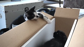 Cute cat becomes extremely Jealous - Video