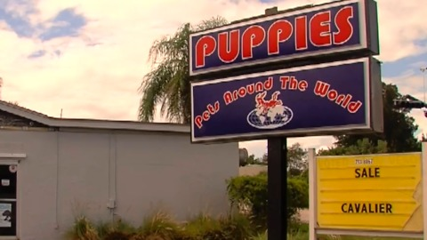 New push to ban pet stores