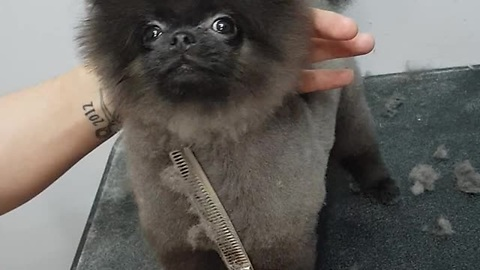 Puppy Performs A Special Grooming Dance