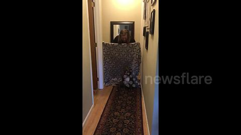 Dog refuses to pay attention to owner during #whatthefluff prank