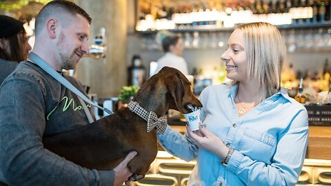 Not The Wurst Way To Spend A Day! Hundreds Of Sausage Dogs Enjoy Pawsecco And Pupcakes At Doggy Cafe