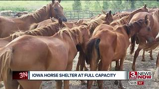 Mini horses in Iowa needs help - Video