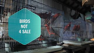 One lady saves birds from sale in Indonesia - Video
