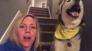 Howling Husky Says 'I Love You' - Video