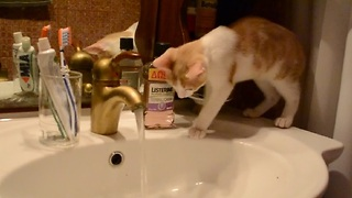 Cautious Cat Plays With Water for First Time - Video