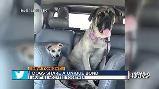Unique bonded pair of dogs need a forever home - Video