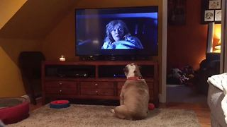 Bulldog takes on one of horror's scariest monsters!  - Video