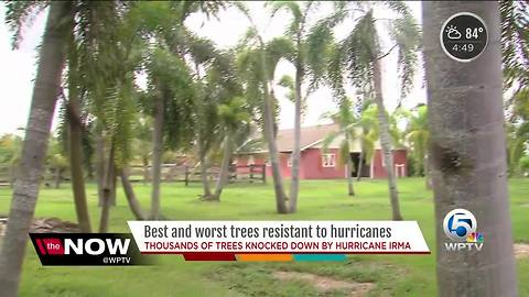 Best and worst trees to survive hurricanes