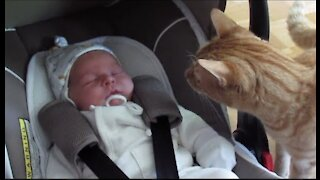 Cats Meeting the Newborn Babies for the FIRST Time