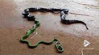 Snake vomits another snake || Viral Video UK