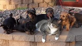 """""""Sleepy Cat Gets Swarmed By Adorable Puppies"""""""