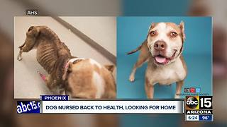 Phoenix dog looking for new home after health issues - Video