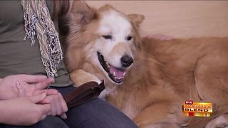 Treating Pet Cancer with Advanced Technology - Video