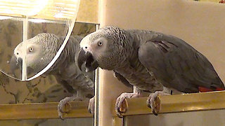 Talking parrot discusses nighttime routine with owner