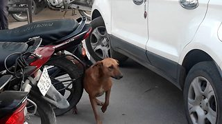 Itchy dog scratches its back with motorbike mudguard and car parking chain - Video