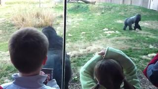Gorilla runs upright like a human - Video