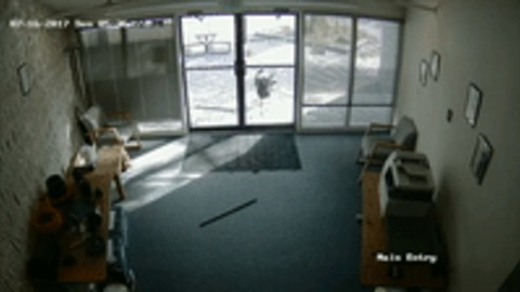You've Goat to Be Kidding - Colorado Office Break-In Carried Out by Unlikely Culprit