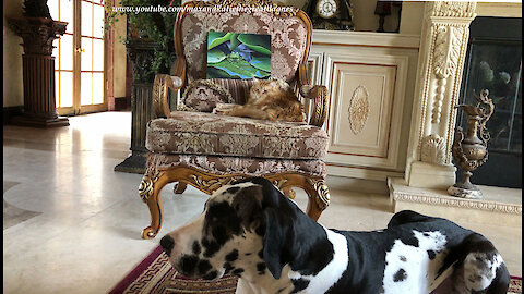Great Dane and Cat Pose Politely With Frog Painting