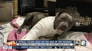 Pit Bull shot, found under I-95 overpass - Video