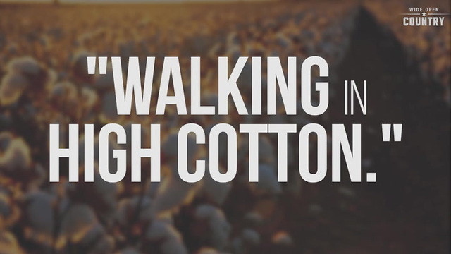 10 southern sayings most people have to look up