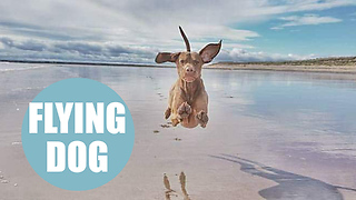 "Hilarious pictures of ""flying dog"" caught in midair - Video"