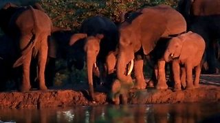 Adorable moment where elephant herd saves baby elephant from drowning - Video