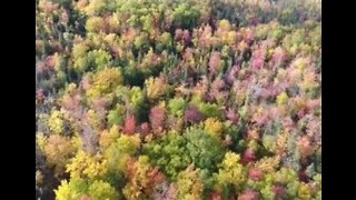 Drone Captures Autumn Foliage in Newfoundland - Video