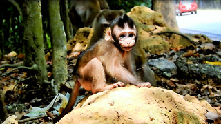 Baby Monkey Tito Son Of Female Alpha  - Video