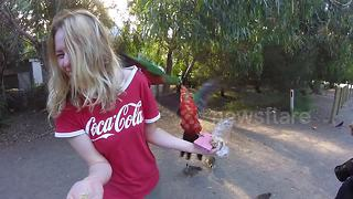 Watch 2 birds give a woman a huge scare when they fight over food - Video