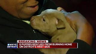 Eight puppies rescued from burning home on Detroit's west side - Video