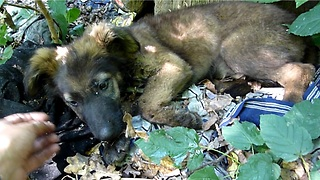 Puppy Abandoned In The Woods Gets The Rescue That Changes Her Life Forever - Video
