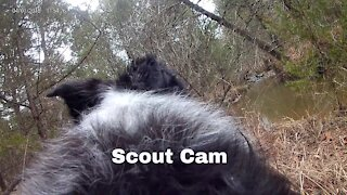 Border Collie Cam