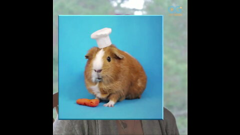 Calendar Model Guinea Pig That Brought Smiles is Today's Daily Diversion!