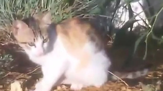 little cat and crunchy cake  - Video