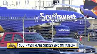 Southwest flight hits bird, forced to land in Nashville day after plane engine explodes - Video