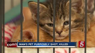Family Pet Shot, Killed In Dickson County