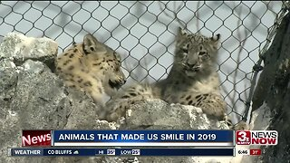 Animals that made us smile