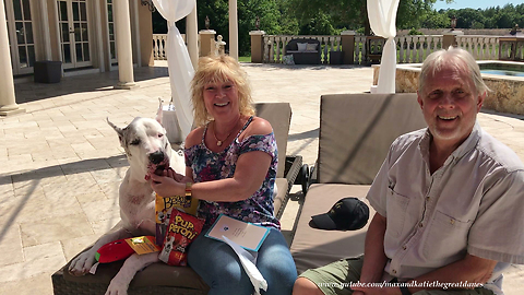 Max the Great Dane Opens Cards and Gifts in Katie's Memory ~ Thank You So Much